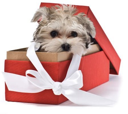 Dog And Puppies Christmas Presents