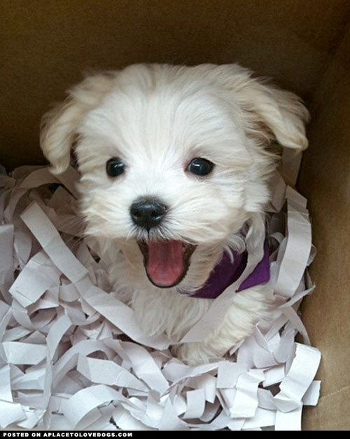 Top 10 pictures of puppies...in boxes