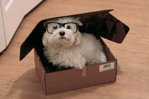 puppy in box with glasses