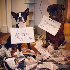 dogs and waste paper