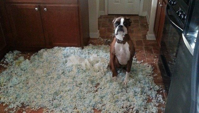 dog and shredded paper