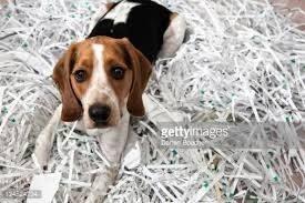 Dog in Shredding