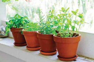 pot-plants-london-flat